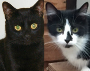 Oreo and Ziggy have a new home