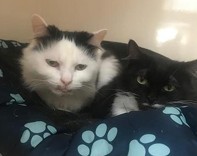 Piggy, white and black, and Wonky, black and white, sitting on a blanket