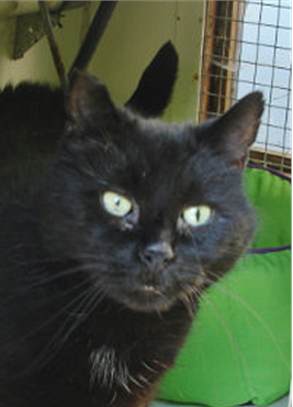 Is Sooty the cat for you?