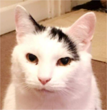 Squeak needs an owner who can let him learn trust at his own pace