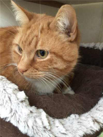 Could you rehome Tiggy
