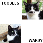 Toodles (top with moustache) Lara Wardy (bottom)