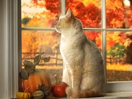 Cat sitting in a window looking out at autumn leaves