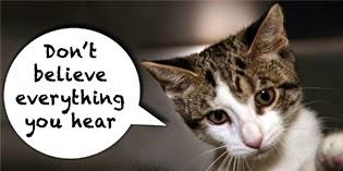 Can Dogs Catch Feline Aids