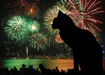 Cat silhouetted against a sky full of fireworks
