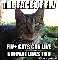 Heathy cat saying this is the face of FIV
