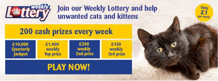 Join our Weekly Lottery and help unwanted cats and kittens!