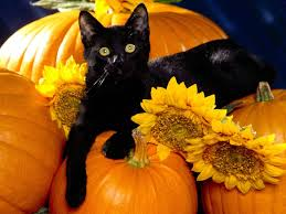 Black cats need homes too!