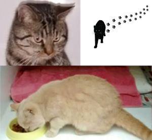 Squidge and Tigger