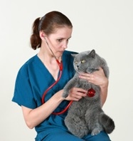 Vet and cat