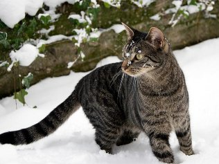 Feral cats find winter particularly hard