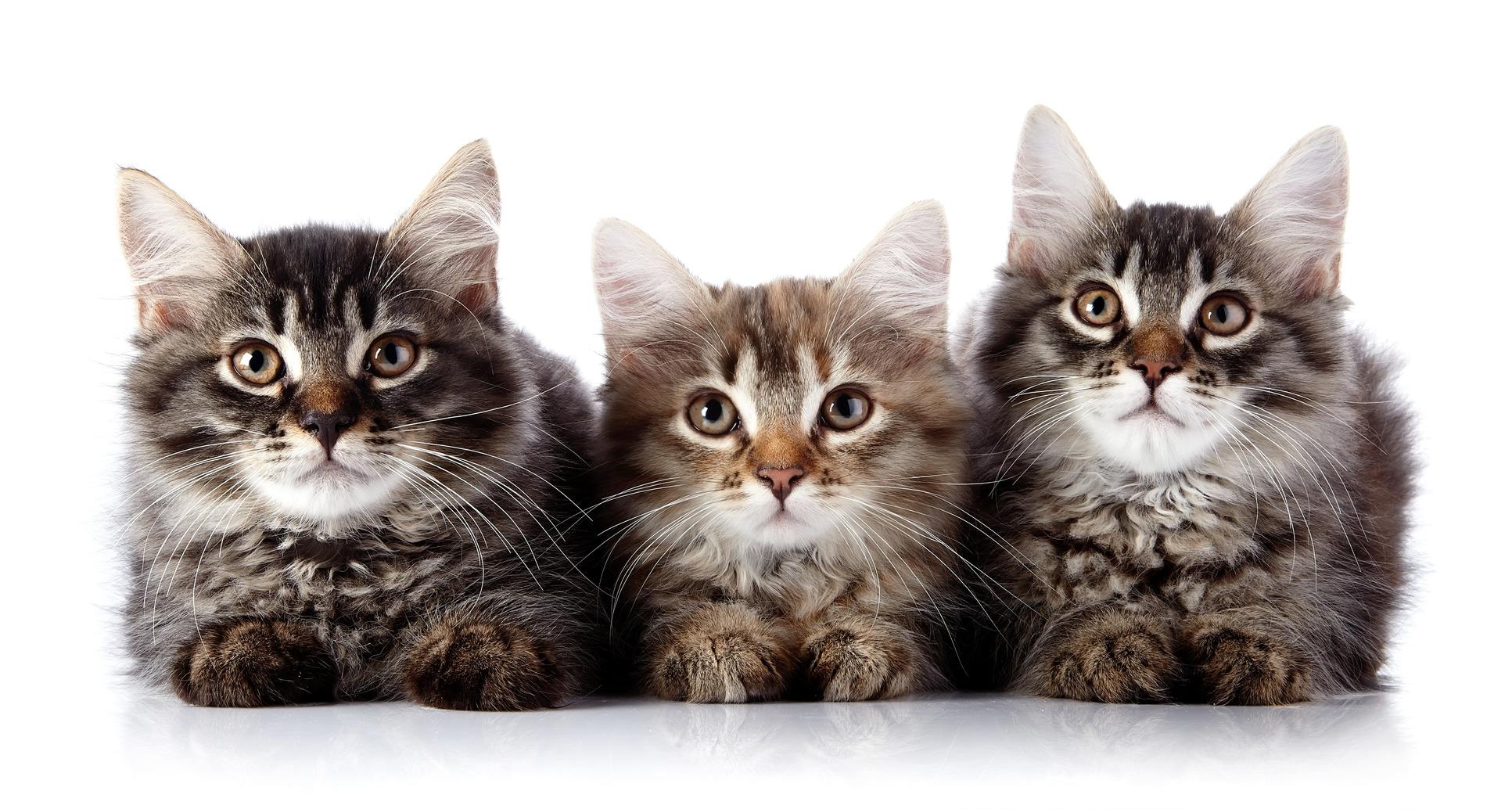 gatti e schizofrenia