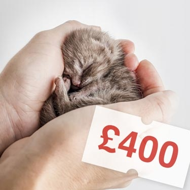 Kitten with a price tag