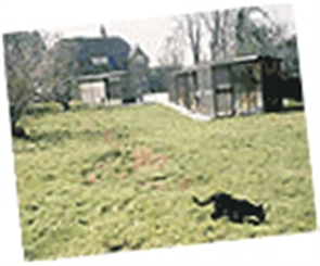 cat in grass in shelter grounds