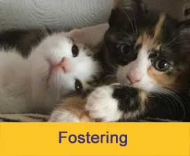 Foster for Cats Protection