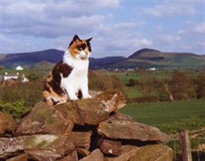 feral cat sitting on wall