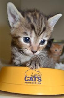 kitten  with feeding dish
