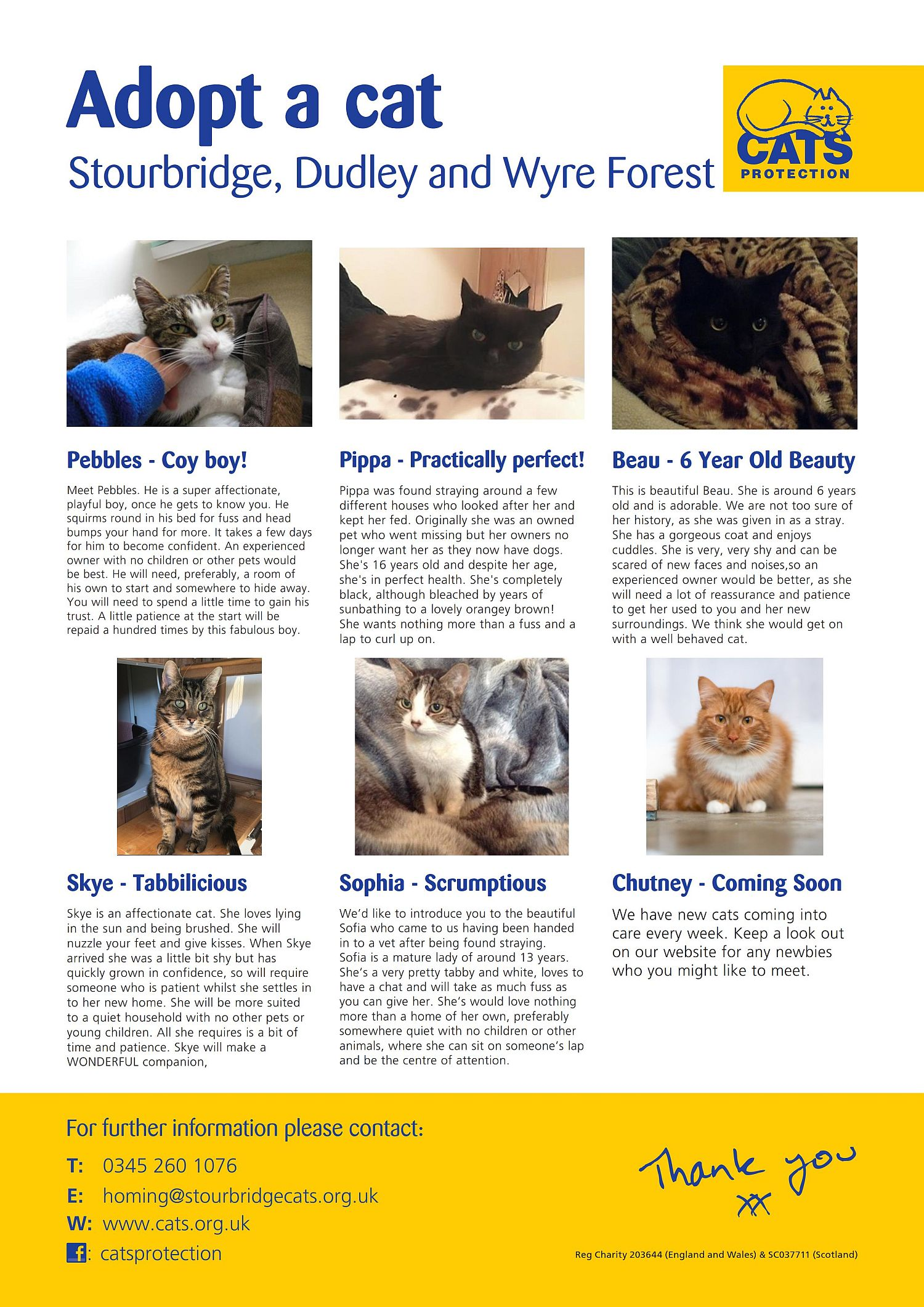 March 2018 Cats for Adoption