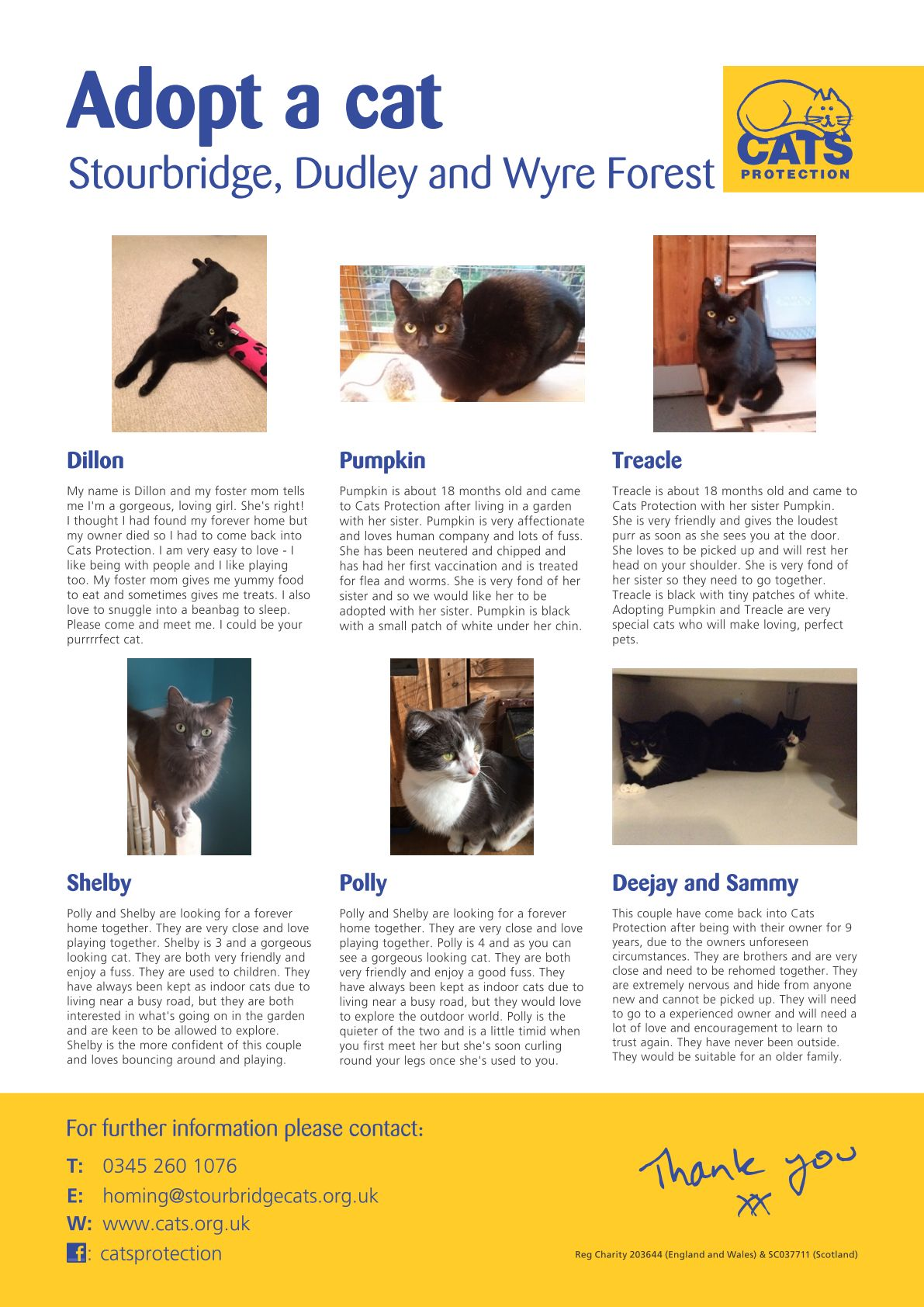 Cat Rehoming November - Mostly Pairs