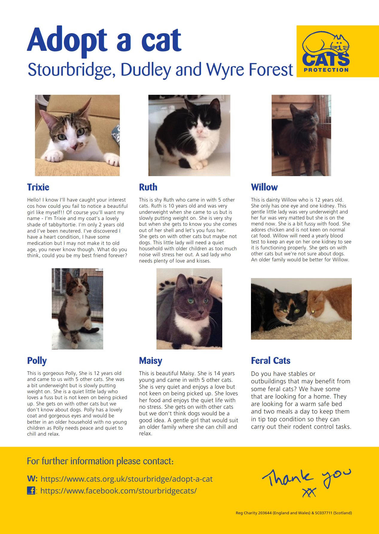 Irresistible January Cats for Adoption