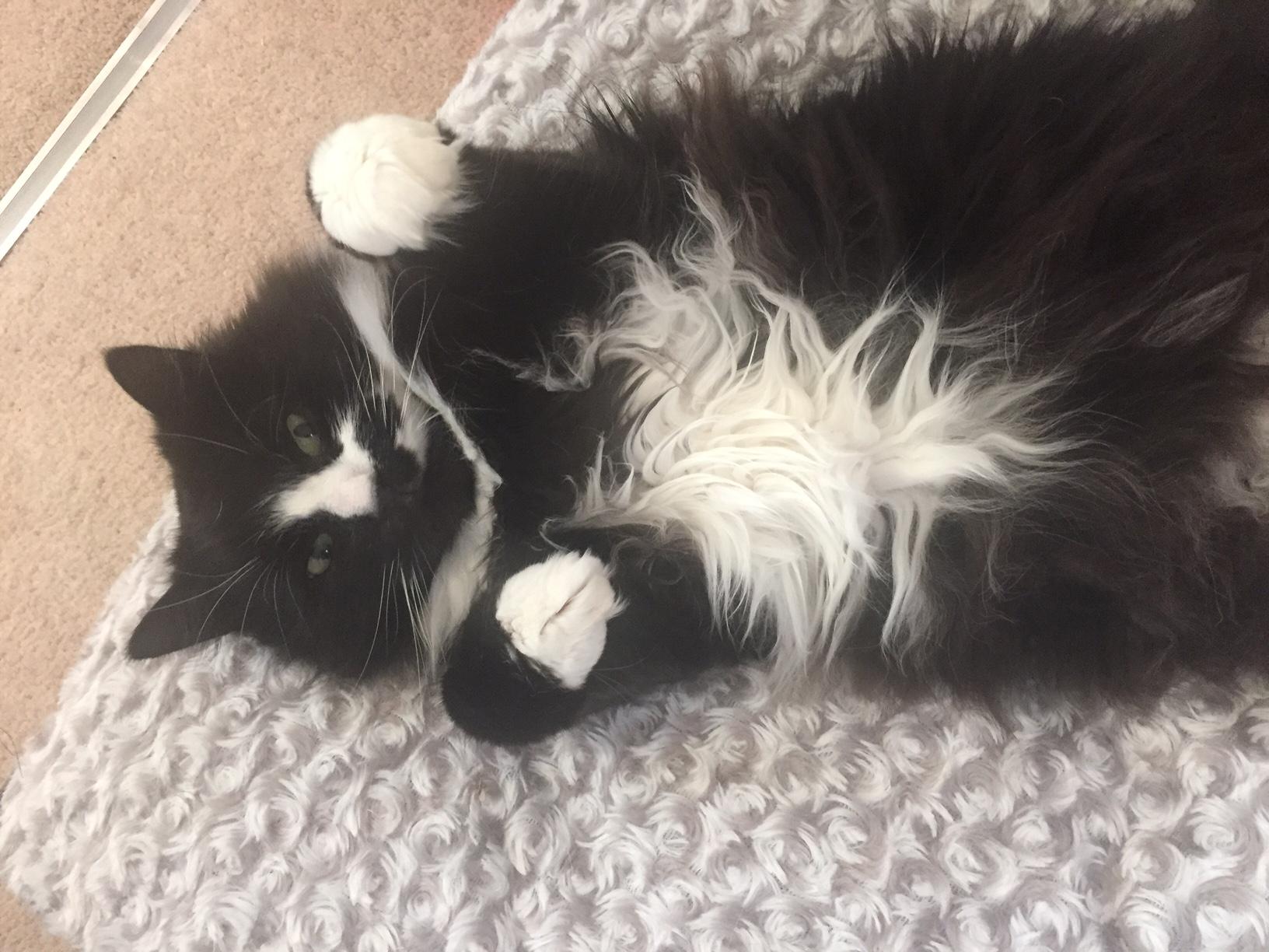 Mungo relaxing