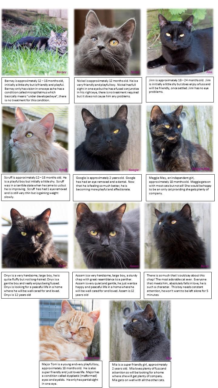 Cat Rescue Wellingborough