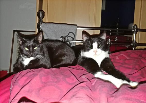 Alfie and Suzie