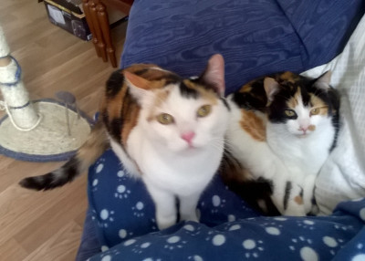 Daisy and Skye