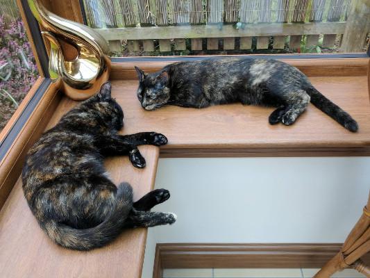 Maddie and Maisie