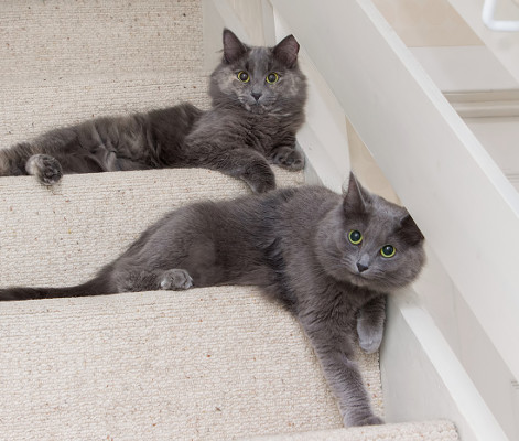 Maisie and Millie