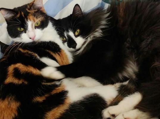 Maisie and Murphy