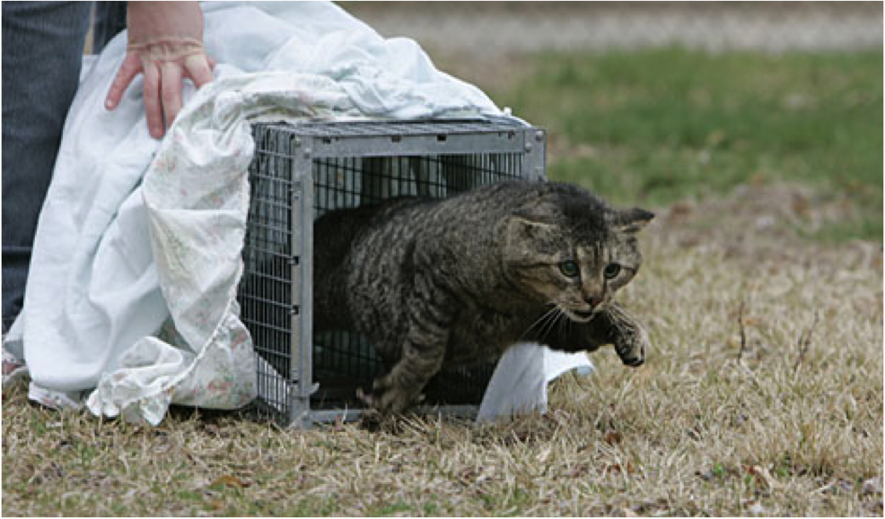 How to get a feral cat spayed