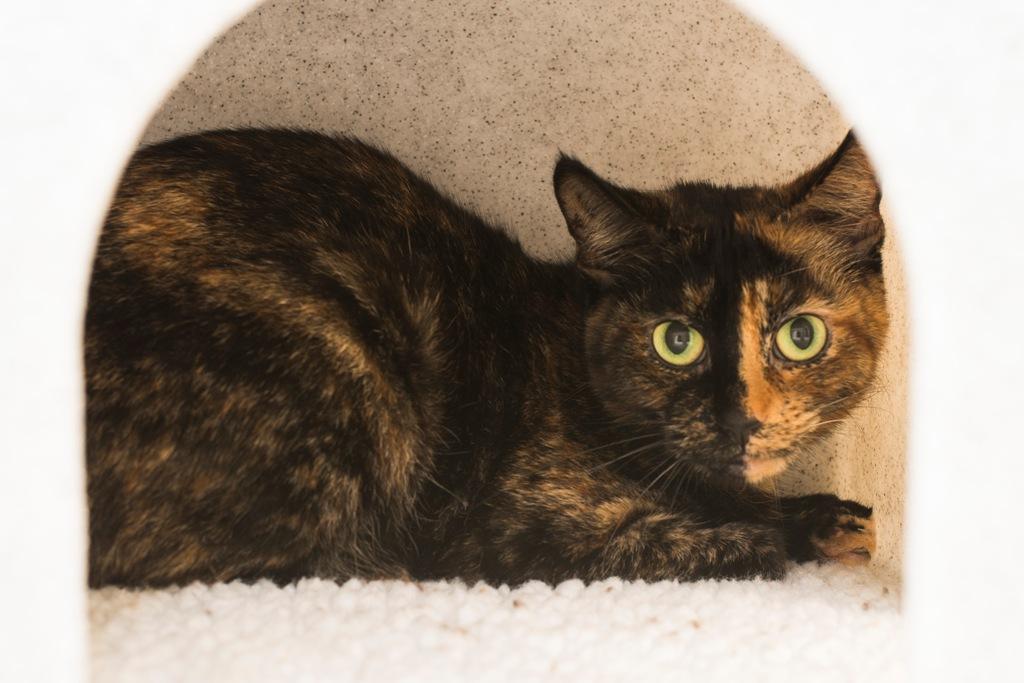 Bridgend Cats Protection Adoption Centre