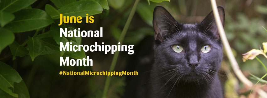 Microchipping month