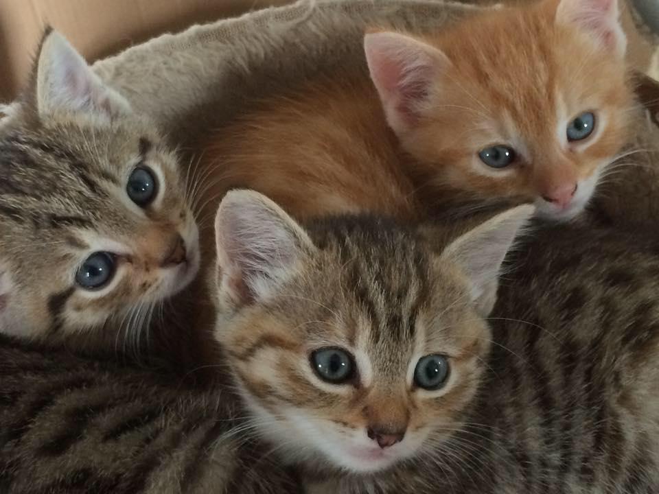 Long Term Cat Fostering Uk