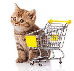 cat shopping