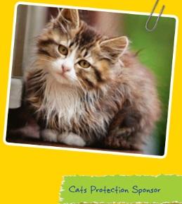 cats sponsorship