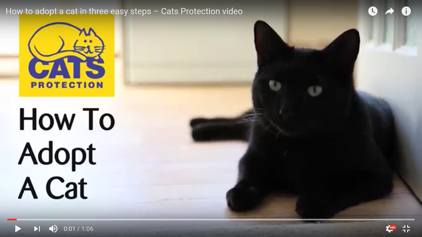 Cats Protection League Kittens London