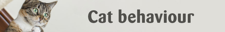 http://www.cats.org.uk/cat-care/cat-behaviour-hub