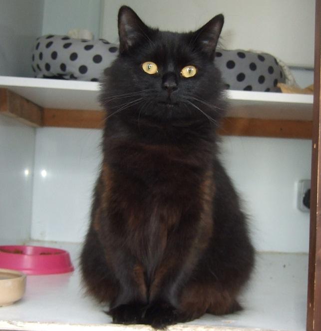 Black Cat Fudge Lincs