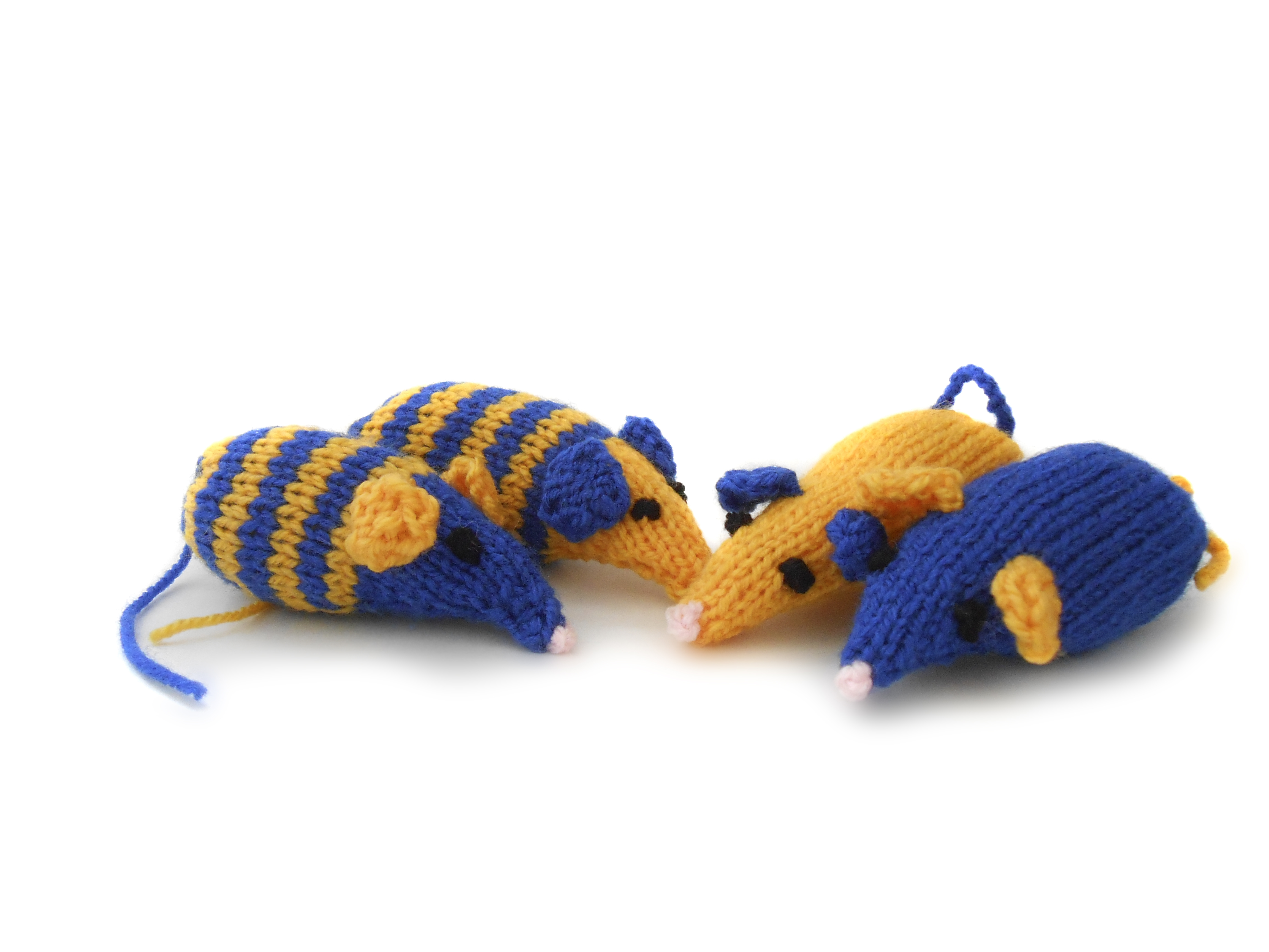 Knit one purr one for unwanted cats and kittens this Christmas