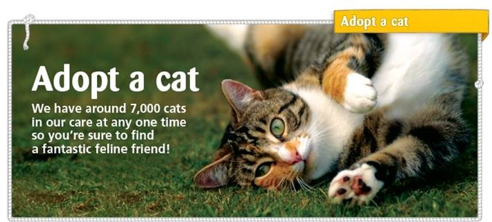 Cats Protection Caithness