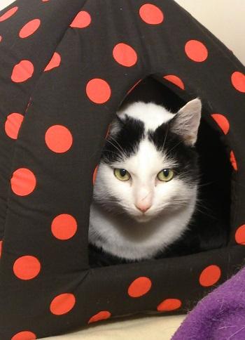 Casper enjoying a donated new igloo from our wishlist