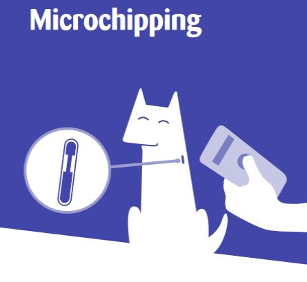 Microchipping Cats Protection Guide