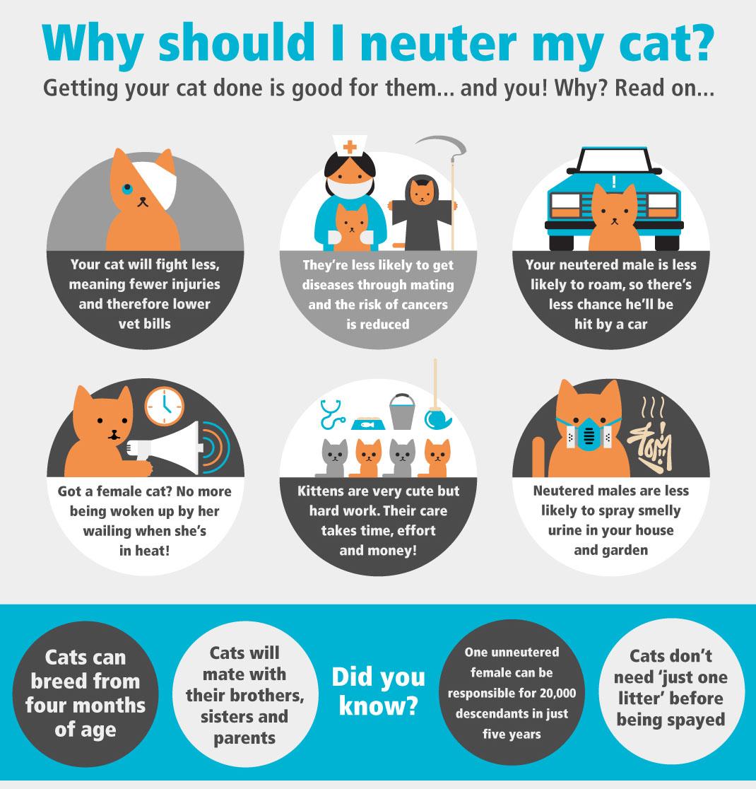 Neuter Your Cat