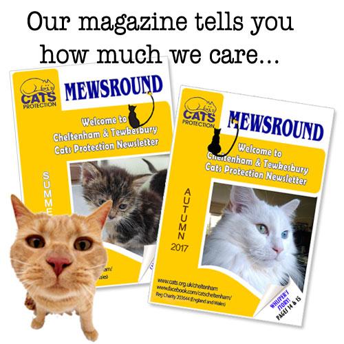 Mewsround magazine