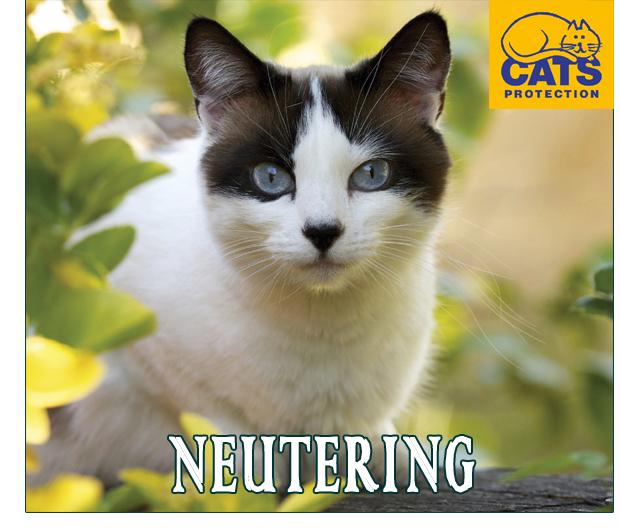 neutering-cats protection