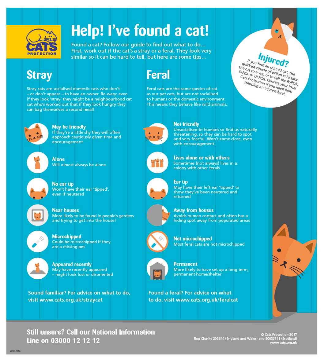 What to do if a cat has unlearned what it was taught 11