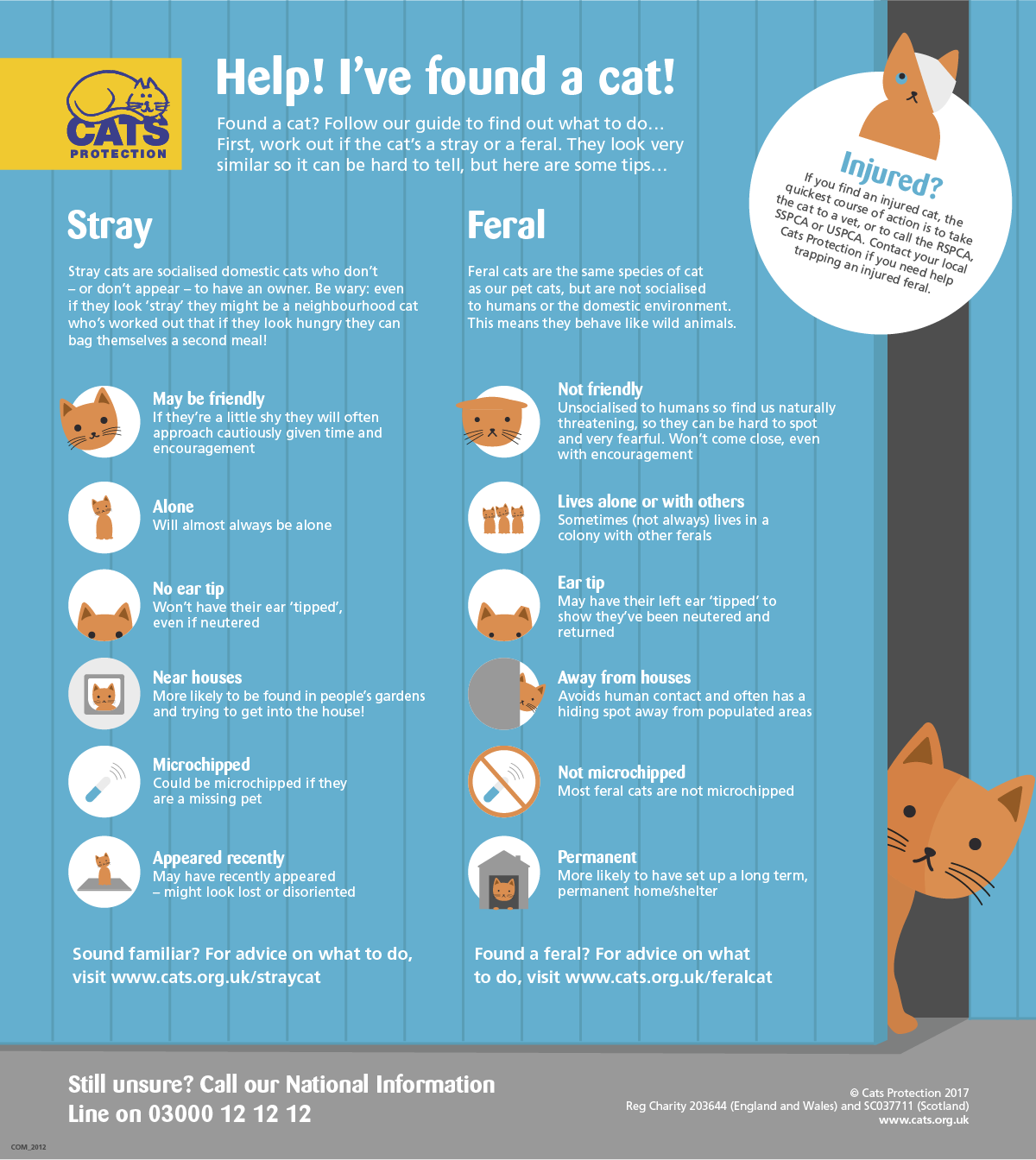 Have you found a stray or a feral cat?