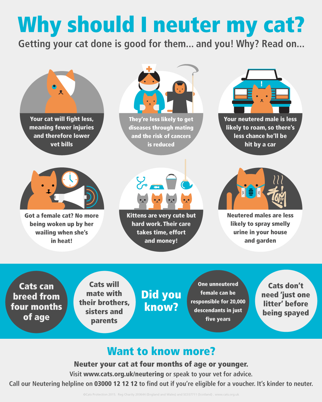 Neutering visual guide - Why should I neuter my cat?